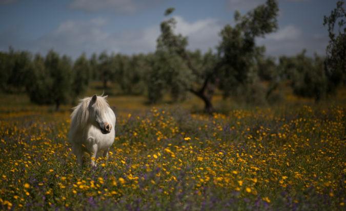 Tenuta San Guido horse