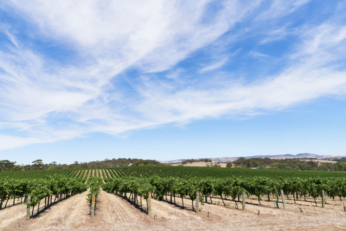 The Barossa Valley is very much Australian Shiraz country