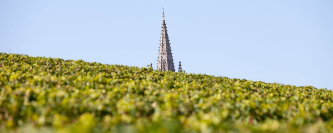 The spire of St-Emilion's monolithic church with grapevines in the foreground