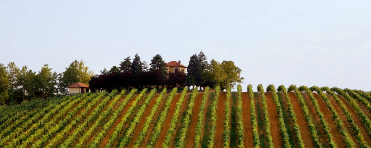 Banfi Piemonte, photographed by A. Brookshaw