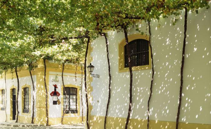 Vine-arboured road between the bodegas of Gonzalez Byass