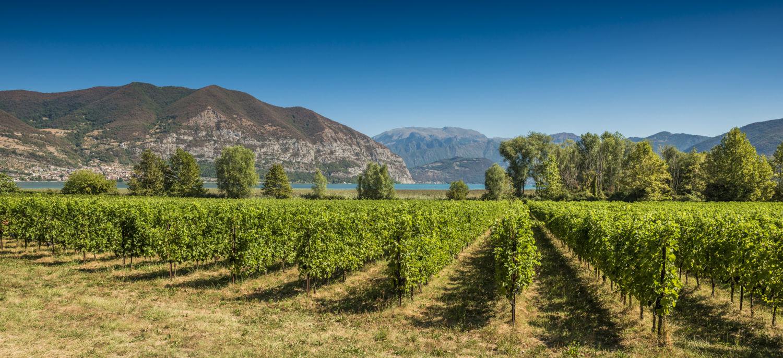 wine vineyard beneath mountain and lake landscape