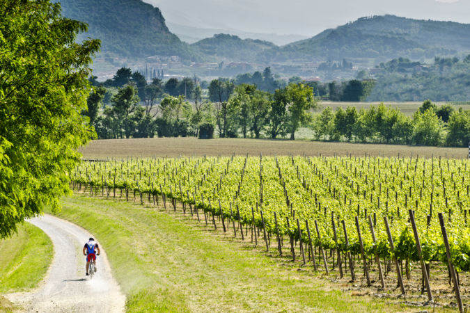 Franciacorta vineyard in Monte Isolo, Italy