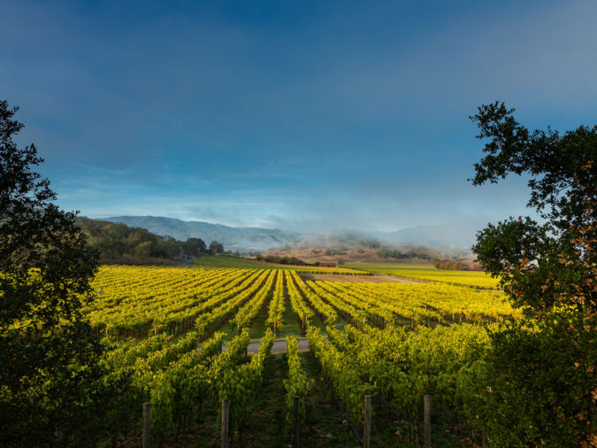 Silverado Trail vineyards beneath clouds which cover the mountain landscape