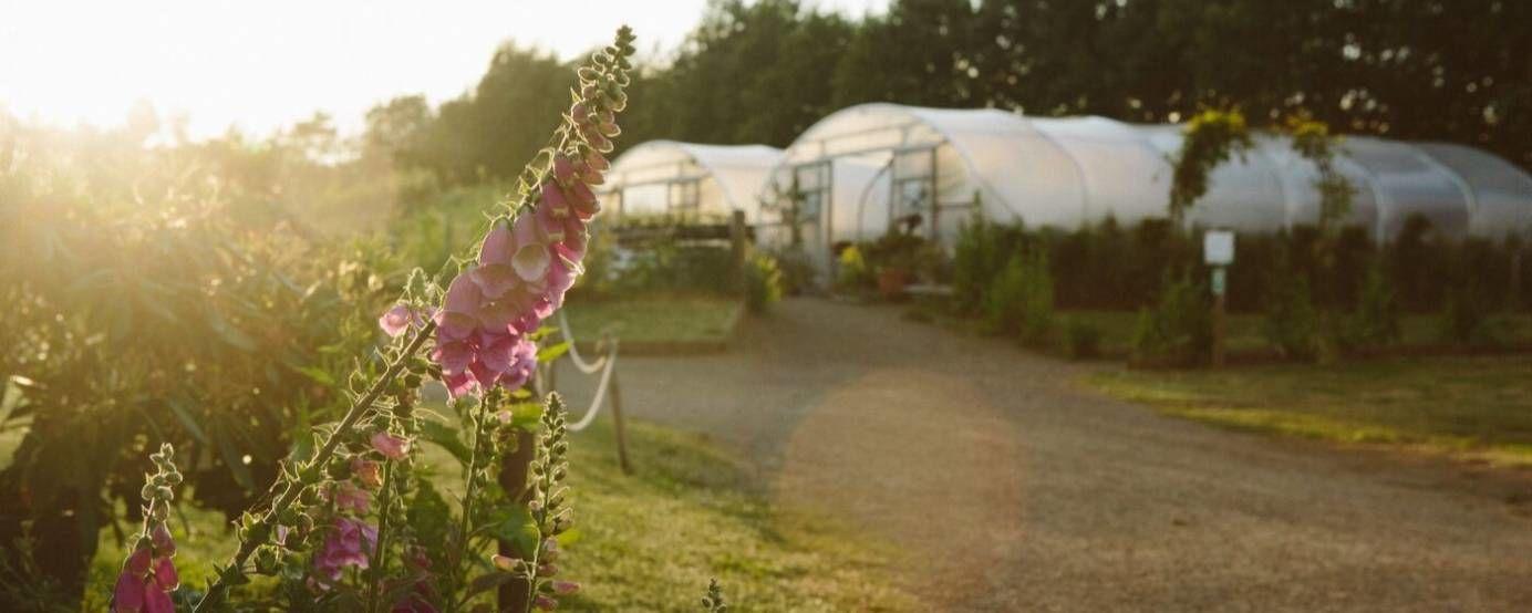 Flowers growing at the Secret Herb Garden in Edinburgh