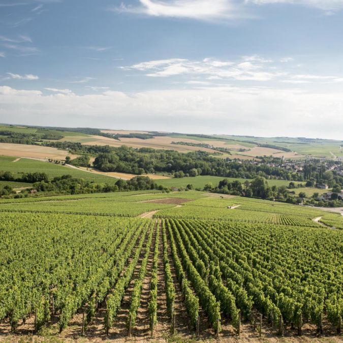 Chablis vineyard