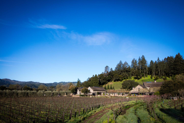Napa Valley Reserve vineyard