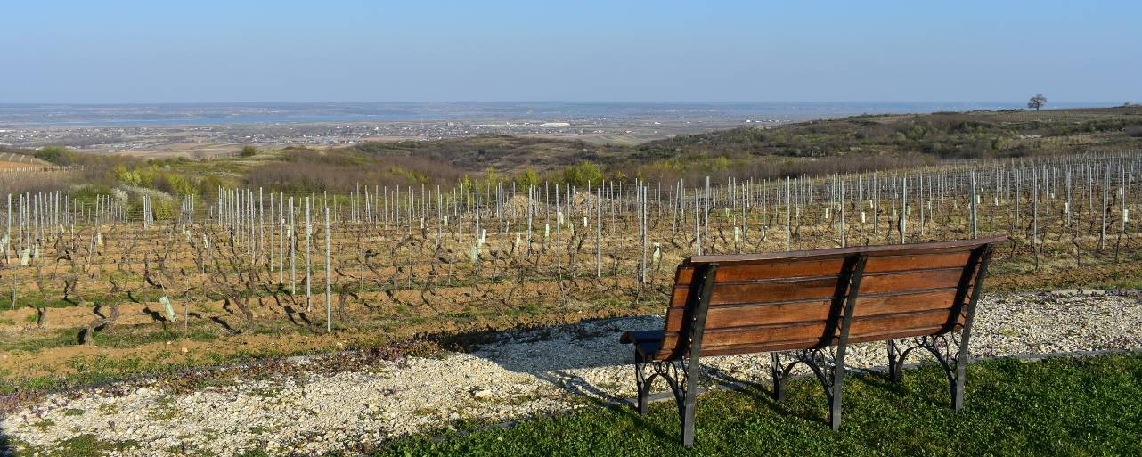 Overlooking the vineyards at Avincis