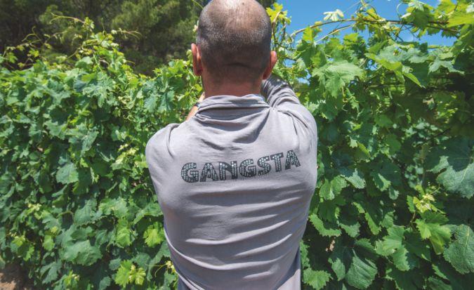 Prison inmate working in the vineyard