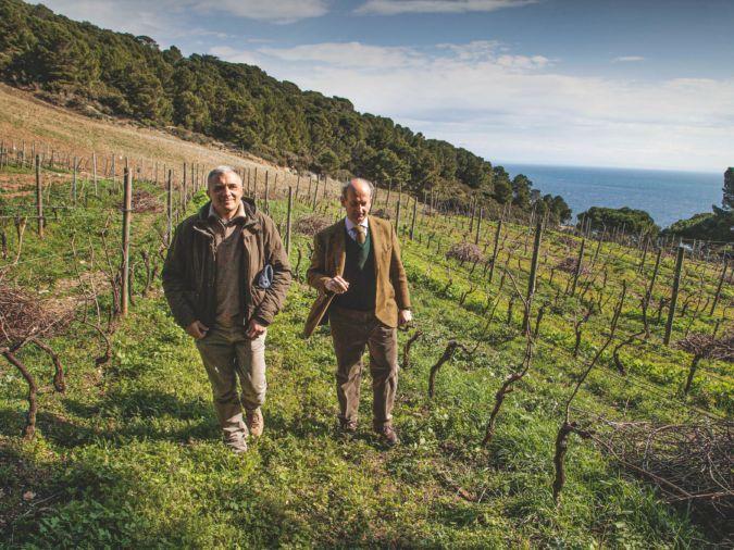 Lamberto Frescobaldi in his vineyard