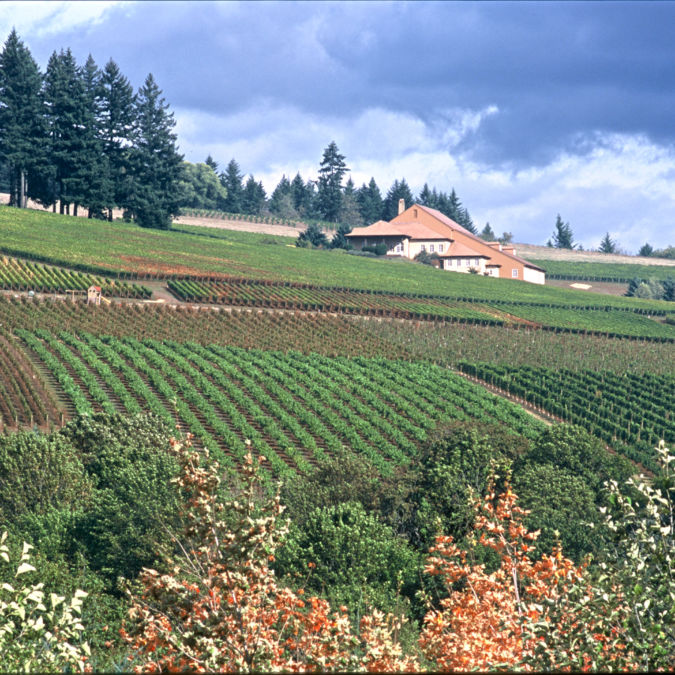 Drouhin vineyards