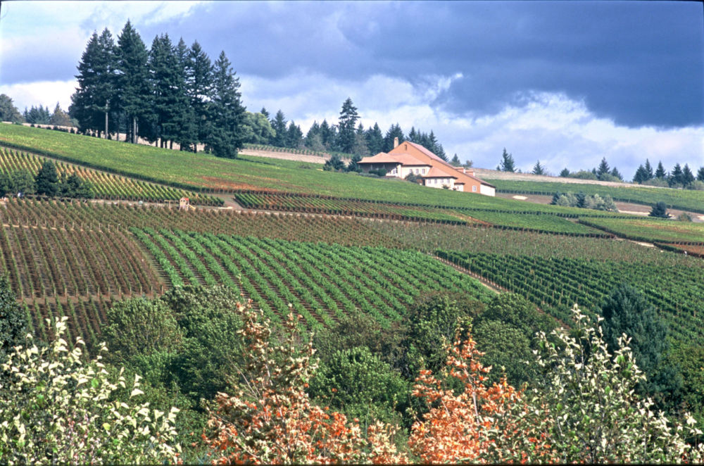 Drouhin vineyards on the side of a rolling hill