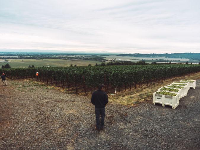 X Novo Vineyard