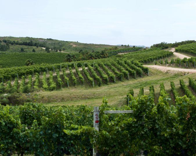 Garzon vineyard