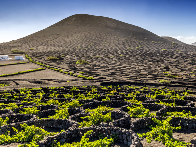 Lanzarote vineyard