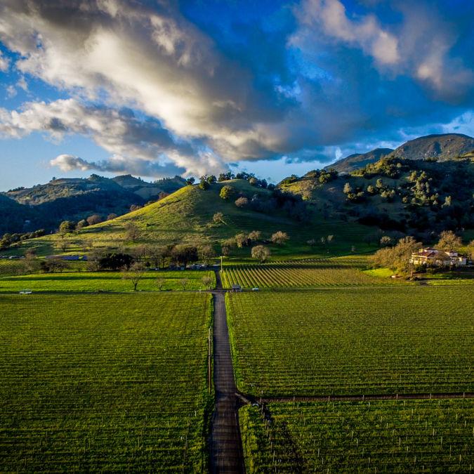 Montelena vineyard