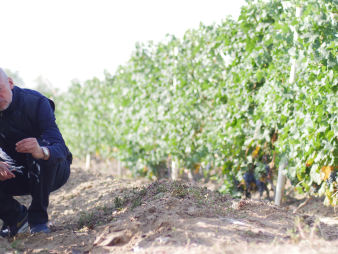 Lenz Moser crouched down on a vineyard floor testing the grape