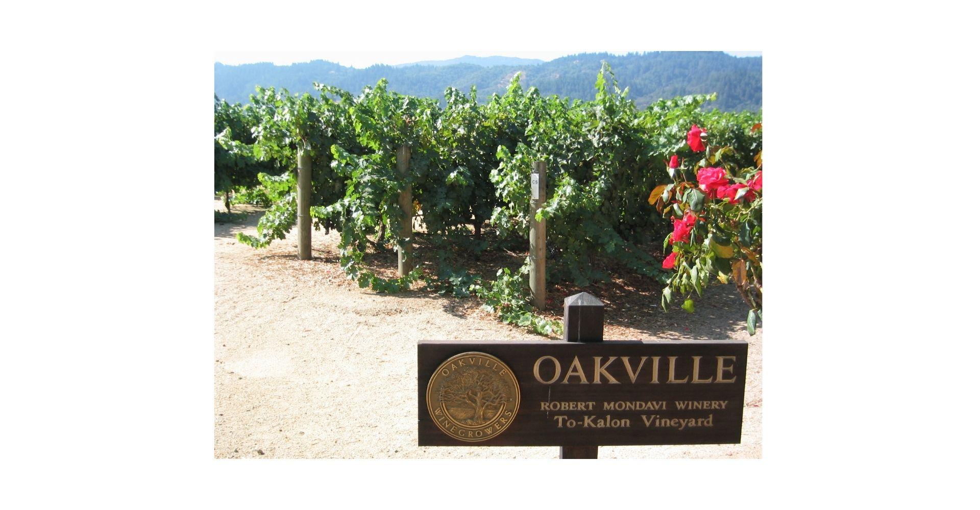 A photo of Mondavi's To Kalon vineyard