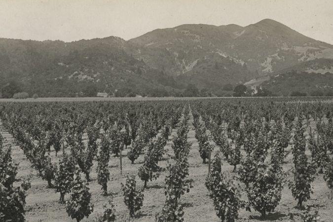 To Kalon vineyard in 1910