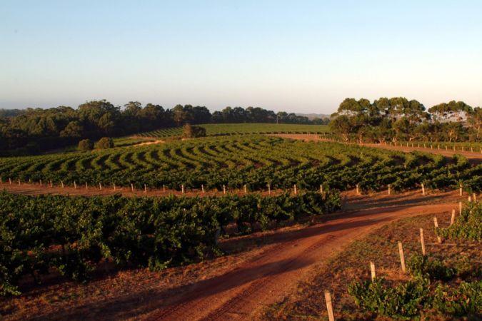 Leeuwin-Estate-Vineyard