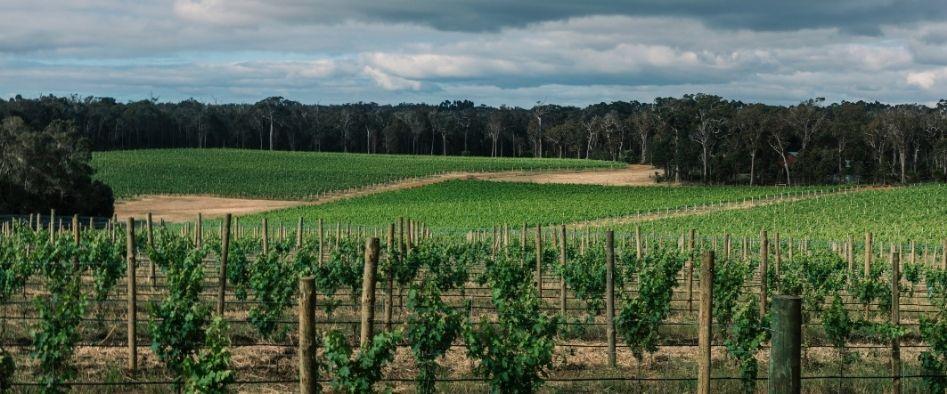 Vasse Felix vineyard