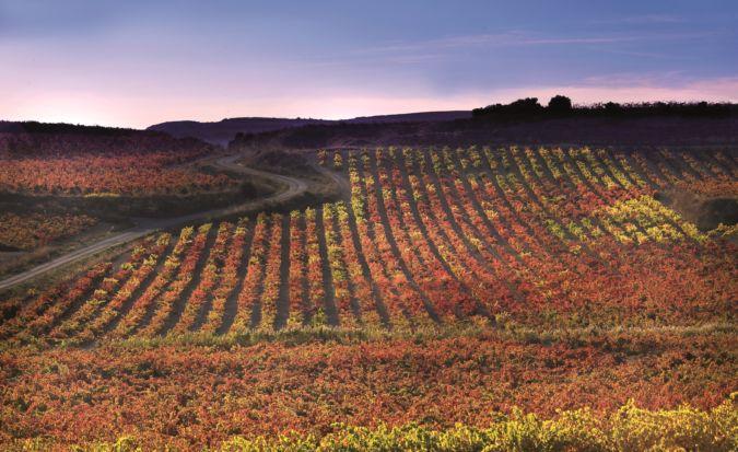 vinedo en otono vineyard in Rioja