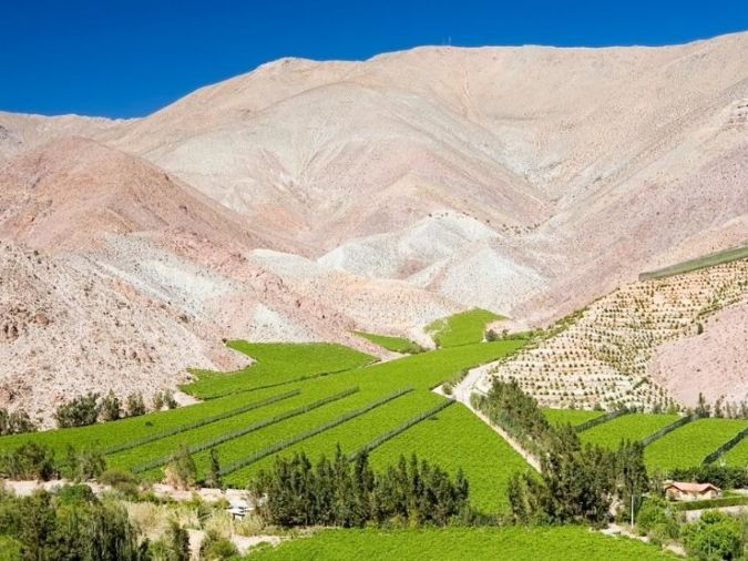 Elqui Valley vineyard in Chile