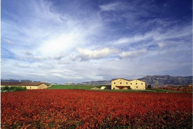 Rioja Alta vineyards in autumn