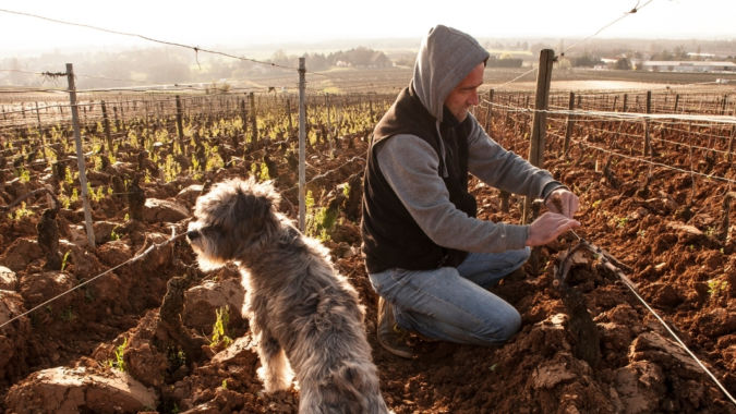 Man and a dog in a vineyard