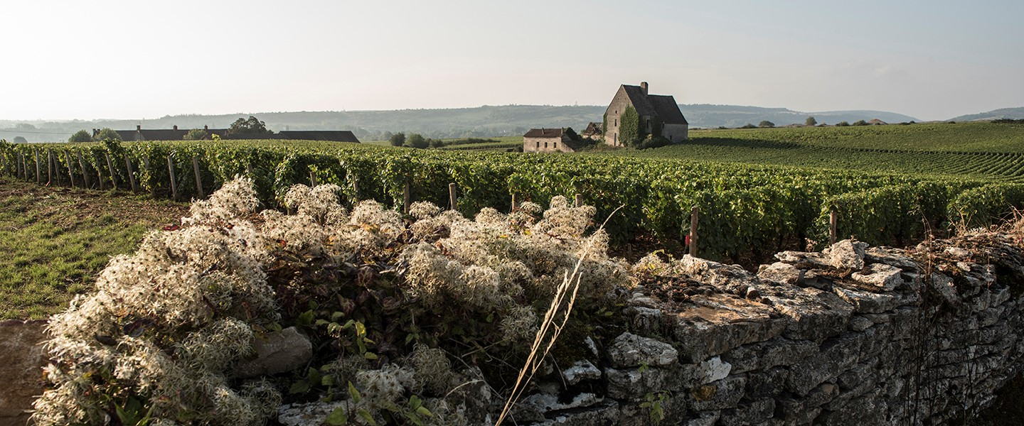 The premier cru of Morgeot, in Chassagne-Montrachet