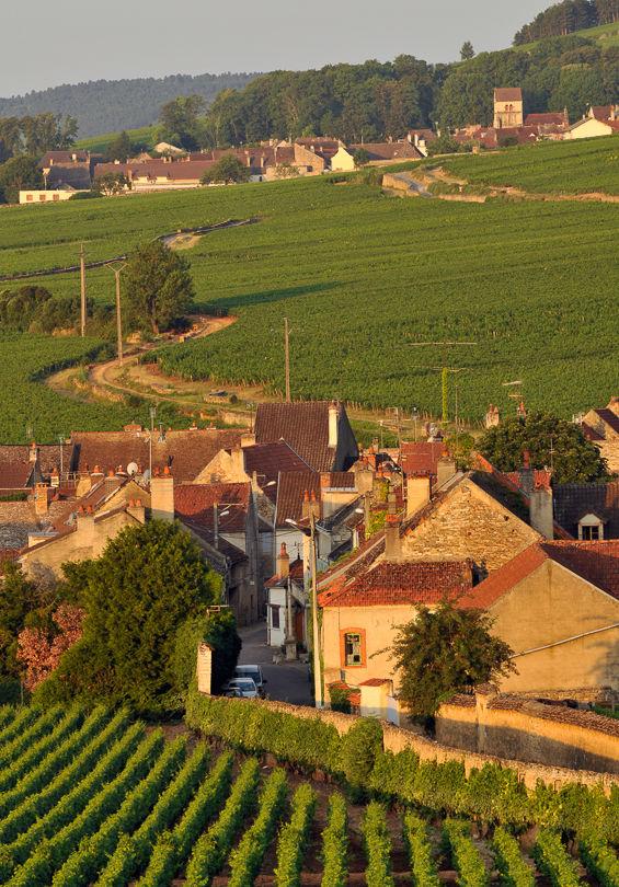 Volnay vineyard