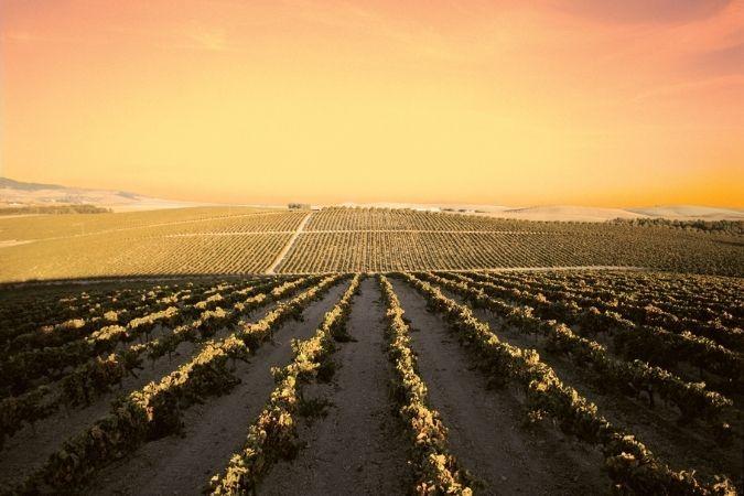 Vineyards – Barbadillo Sherry – Barbadillo Reliquia bottlings