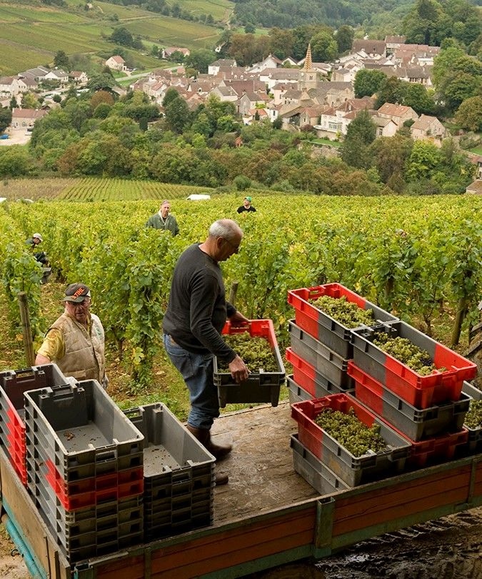 Domaine Rollin Chardonnay En Charlemagne