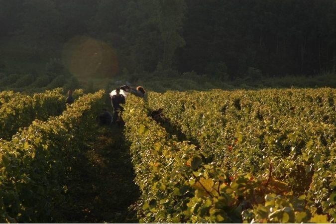 Domaine du Pélican vineyards