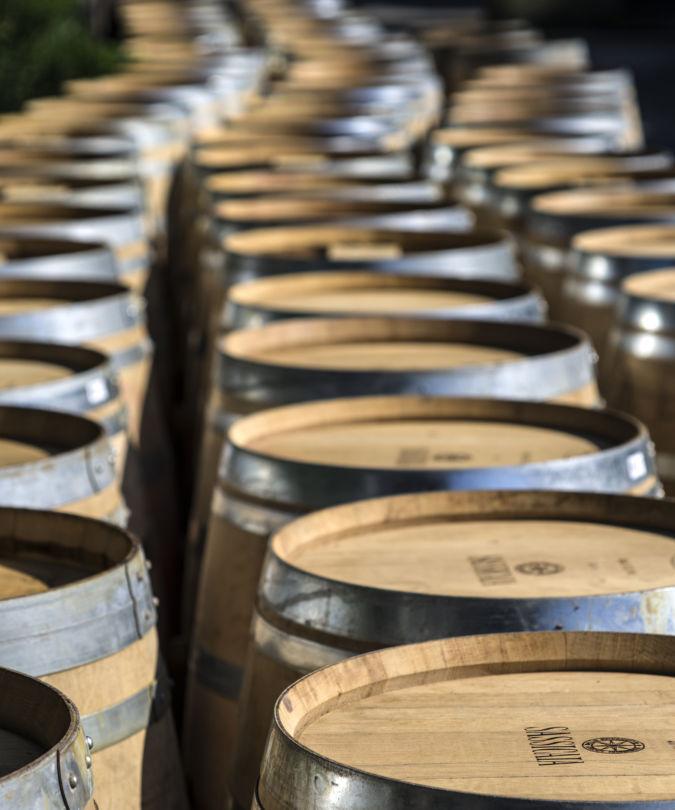Tenutas San Guido wine barrels