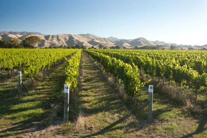 Vineyard, Marlborough, New Zealand
