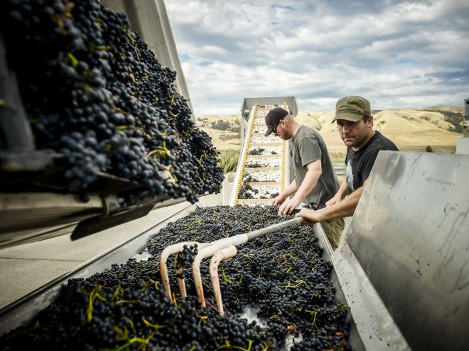 Escarpment Vineyard New Zealand wine producer
