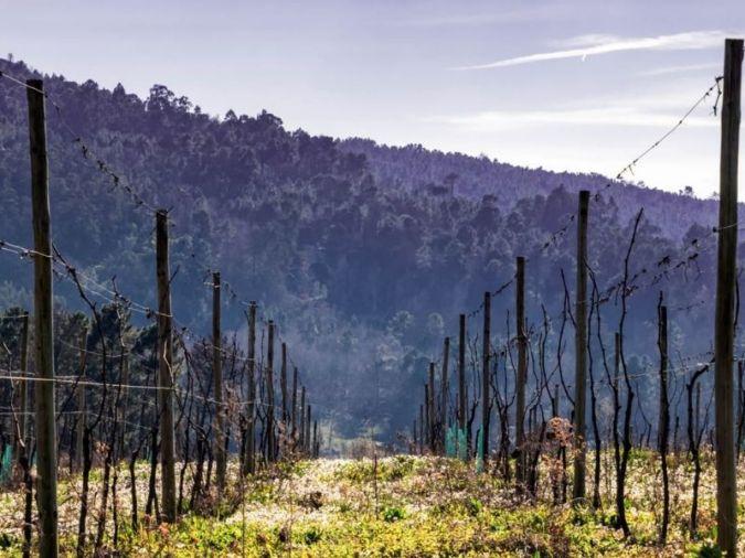 Dão region – Portuguese wine