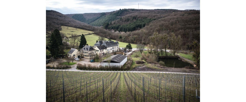 Scharzberg vineyard