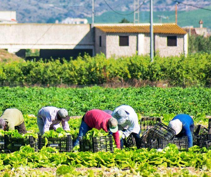 Farmers work the land in a field in Murcia, Spain
