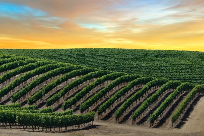 Napa Valley - Californian red wines