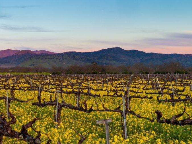 Napa panorama - Californian red wines