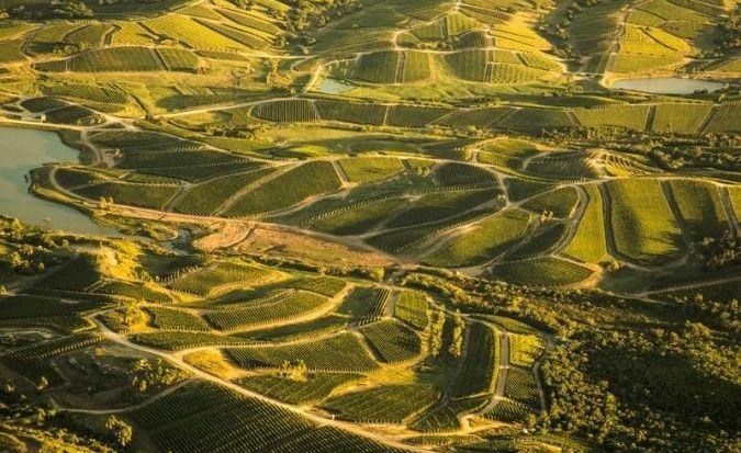 Garzon vineyards - cult wine
