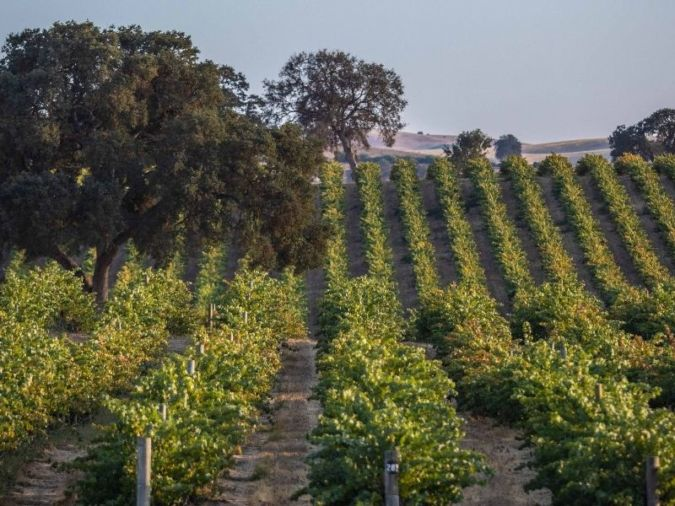 Paso Robles - Penfolds California Collection
