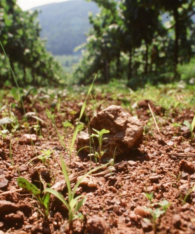 Rebholz soils – natural wine