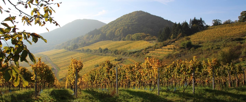 Rebholz vineyard – natural wine