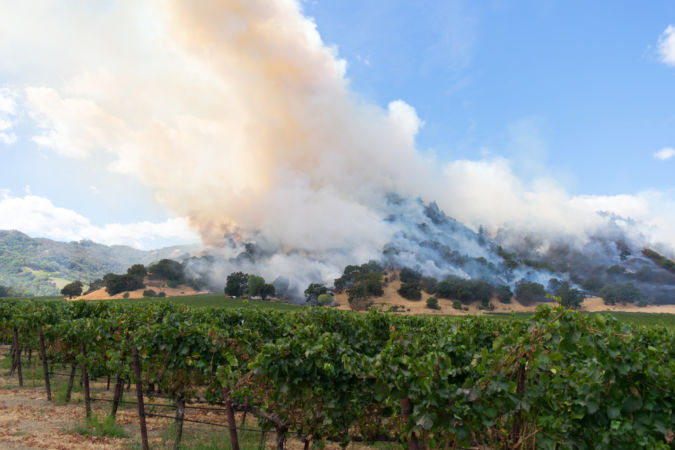 California wildfires near a vineyard