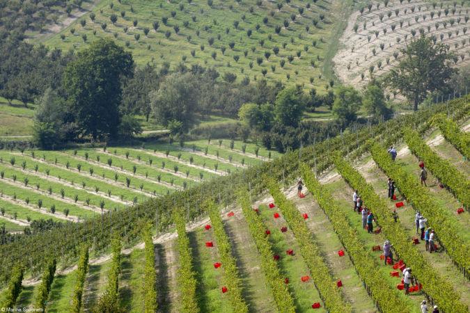 Marina Spironetti Harvest