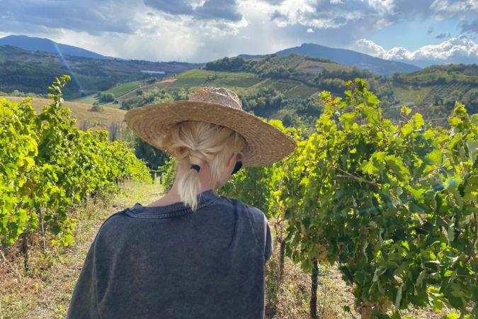 Peccorino vineyards in Italy's Marche wine region