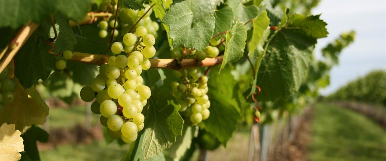 Langham Estate – English sparkling wine